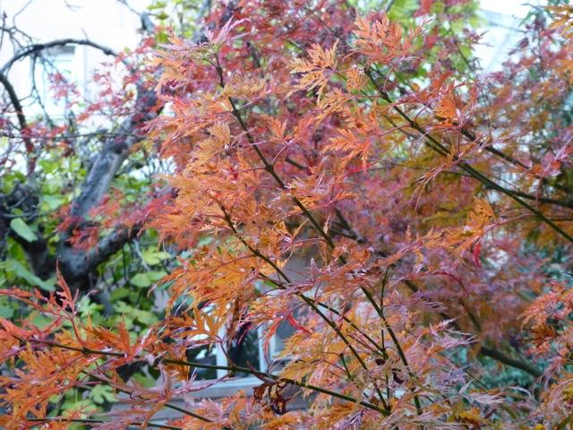Pourquoi les feuilles changent de couleurs en automne ?