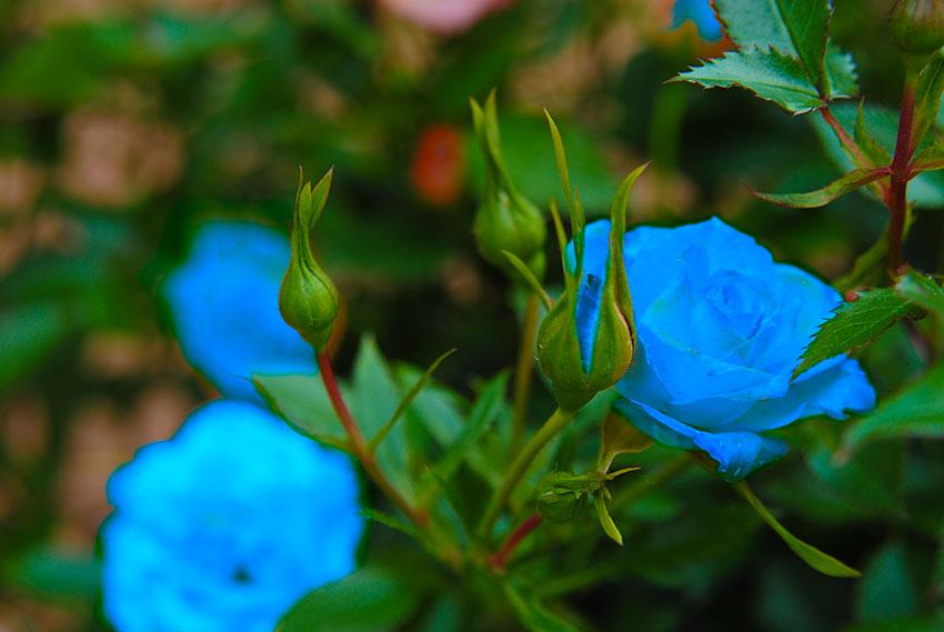 Les couleurs des fleurs en 15 questions